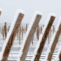 argentina ski fence